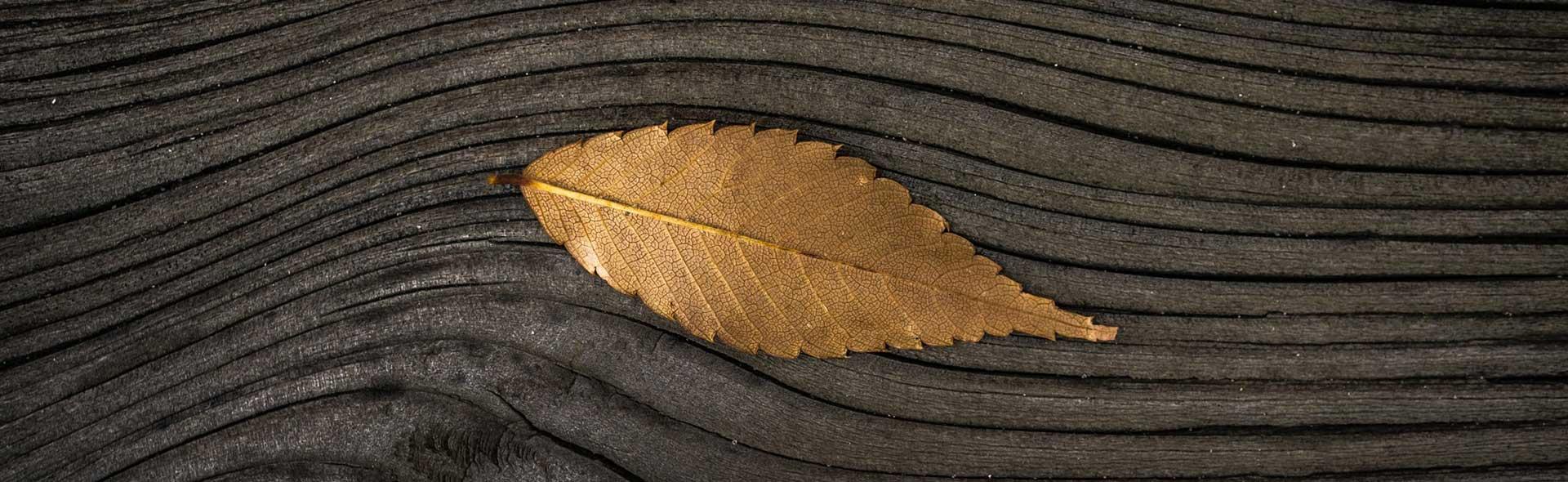 slider leaf